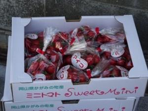 岡山のトマト